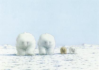 Kaart 141: IJsberen in de sneeuw