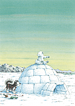 Prentbriefkaarten 10 ex., Kleine IJsbeer en Nanouk