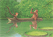 Prentbriefkaarten 10 ex., Boomboot