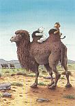 Prentbriefkaarten 10 ex., Kameelrit