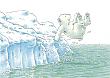 Prentbriefkaarten 10 ex., Kleine IJsbeer sprong in het water